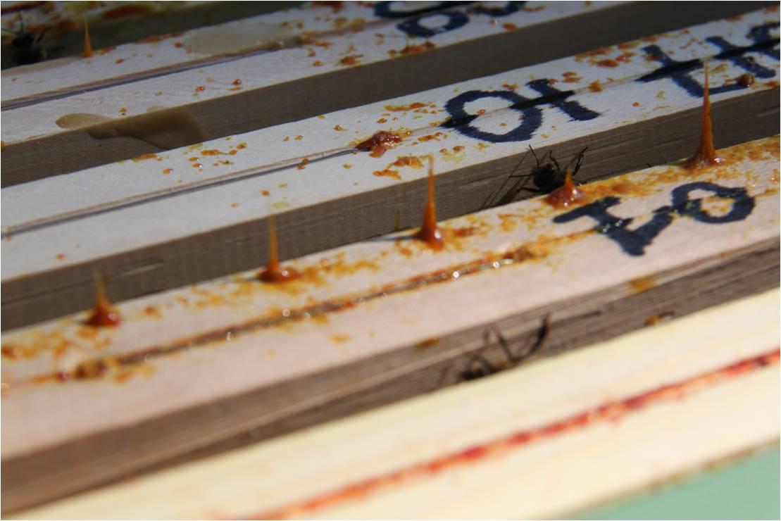 Découverte de la propolis