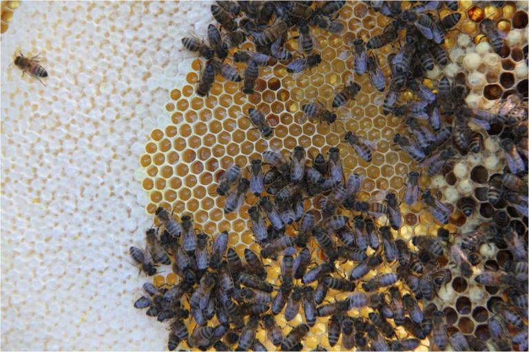 Honey loading