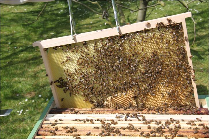 à l'ouverture de la ruche