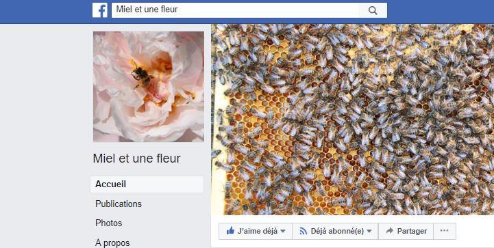 Miel et une fleur