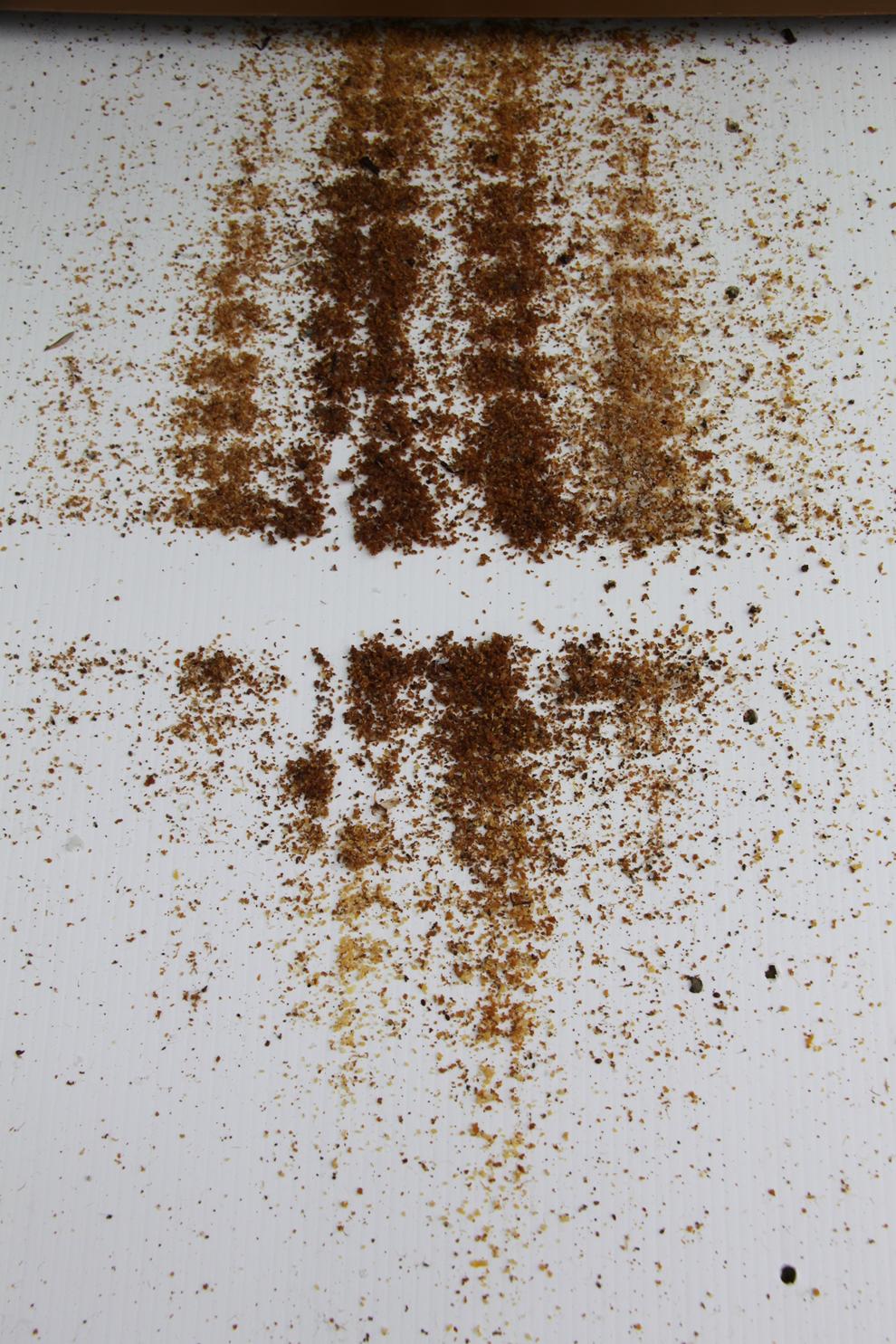 Plancher ruche sain